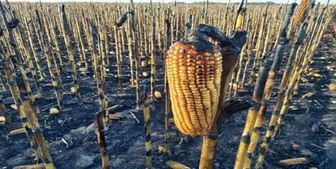 Descripción: Hechos vandálicos en campos de productores generan preocupación