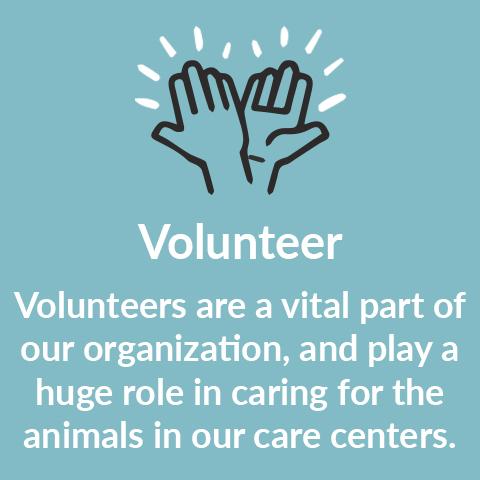 Volunteer Footer Image 2