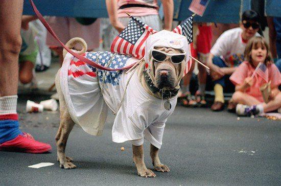 Image result for patriotic animals