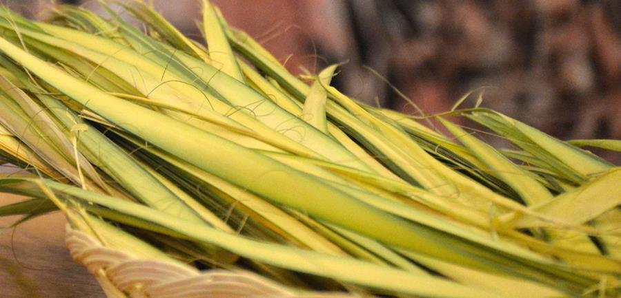 Visit From Palm Sunday to Pentecost page