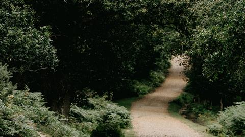 Image of a wide dirt trail in the forest.