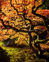 Ommen TomSeattle Japanese Garden III