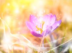 SpringLight-sm4web