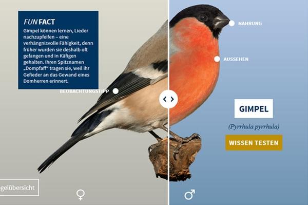 """E-Learning-Tool """"NABU-Vogeltrainer"""" Quizze, Puzzles und Funfacts zu unseren Vögeln"""