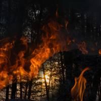URGENCE AMAZONIE : stop à la déforestation !
