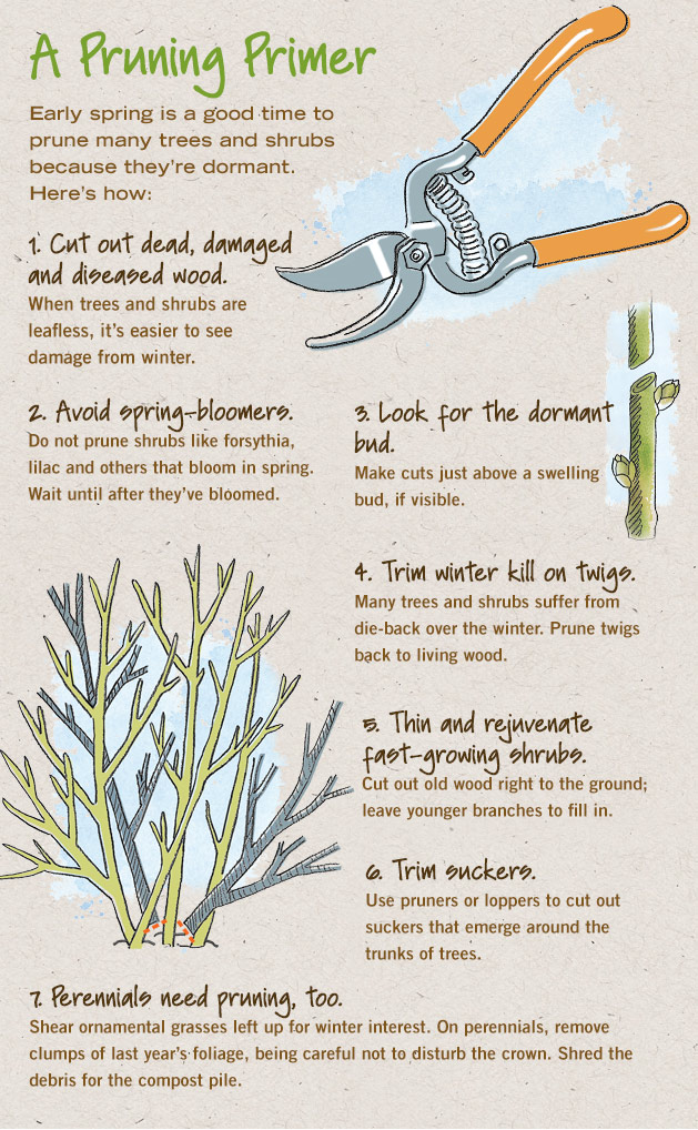 A Pruning Primer - Early spring is a good time to prune many trees and shrubs because they are dormant. Here's how.