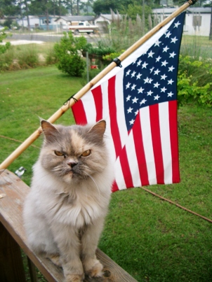 Image result for memorial day cats