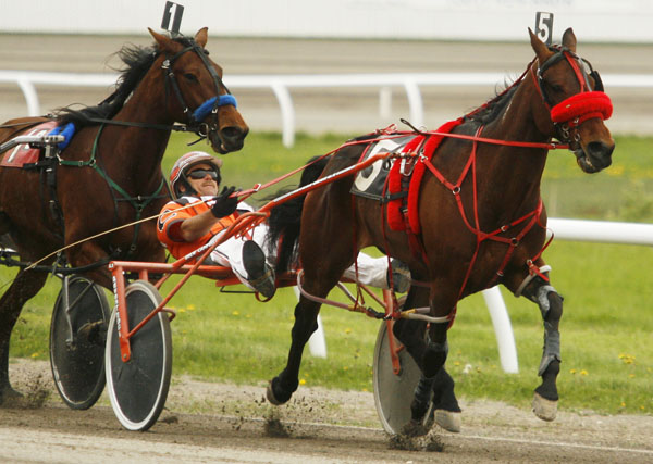 Image result for picture of harnessing racing