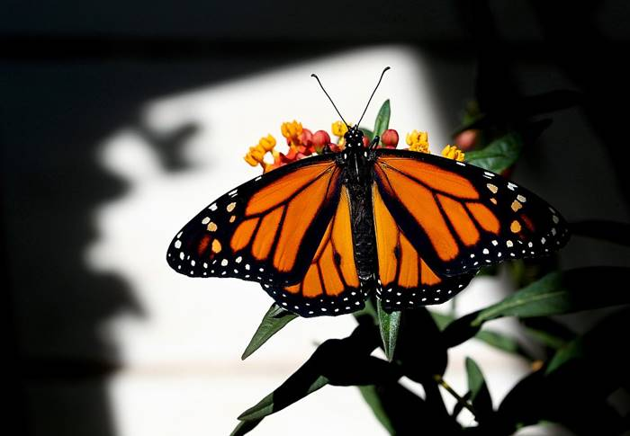 Photographer Greg Lovett captures the amazing story of the birth of a monarch butterfly.