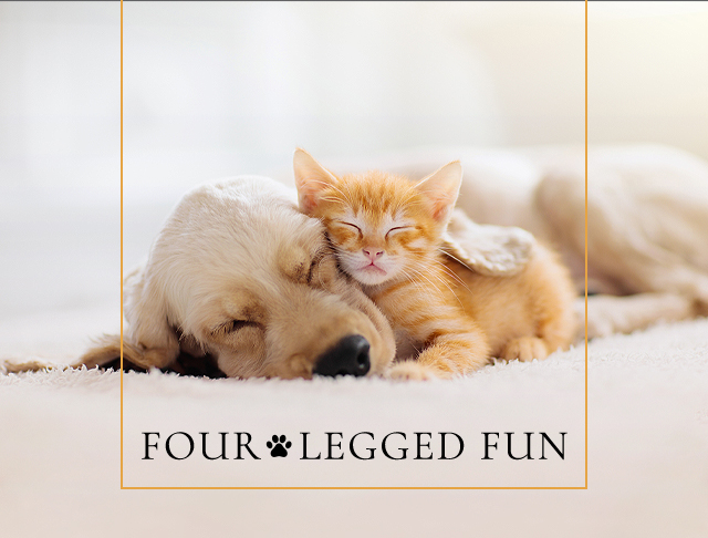 four legged fun