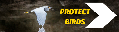 Protect Birds