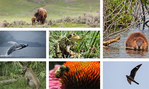 Help Wildlife That Help Us!
