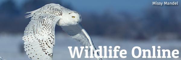 Wildlife Online