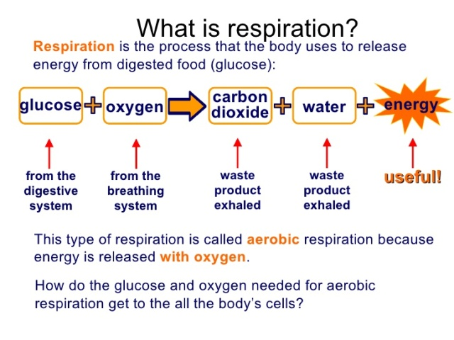 WHAT IS MAN? SPIRITUALITY AND SELF-REALIZATION. RESPIRATION PLAYS CRUCIAL ROLE IN ENERGY TRANSFORMATION.