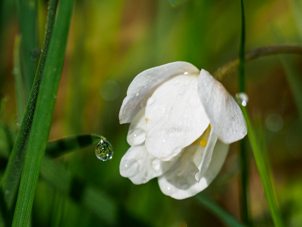 Droplet   von Highlandscape
