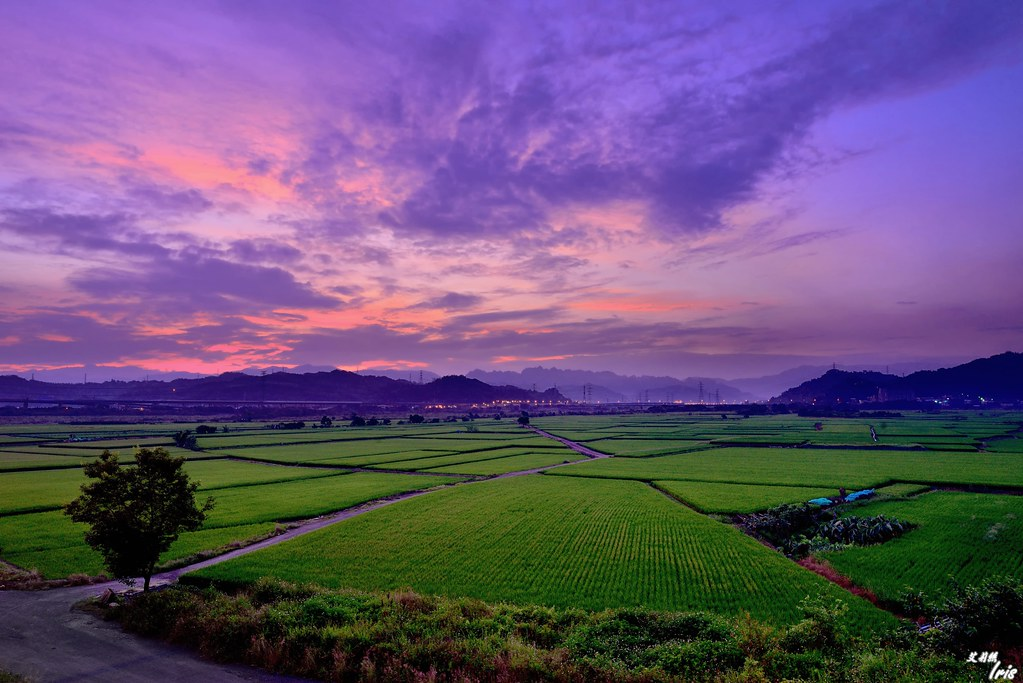 日出  Sunrise at paddy field | von Clonedbird 克隆鳥 & Iris 艾莉絲