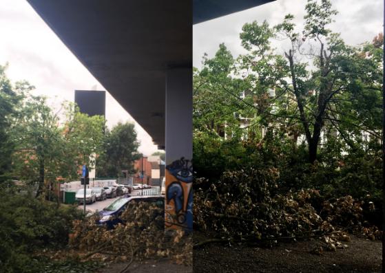 Damaged trees at Napier Road