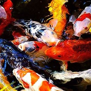 Keep your Koi happy and healthy over the Fall & Winter.