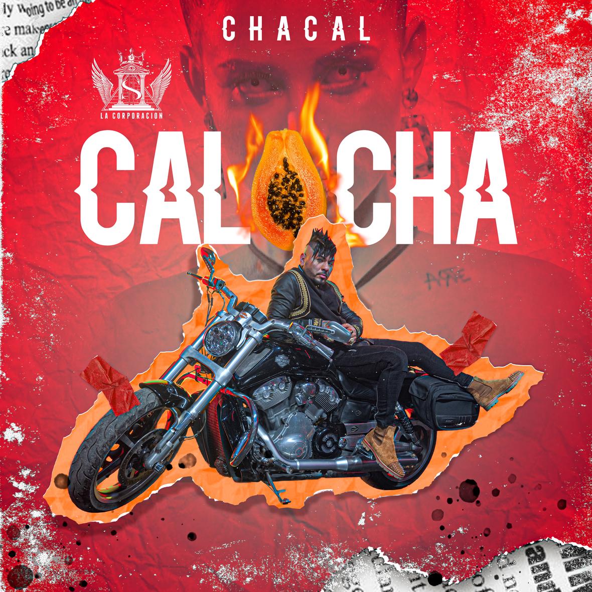 Art - Chacal - Calocha