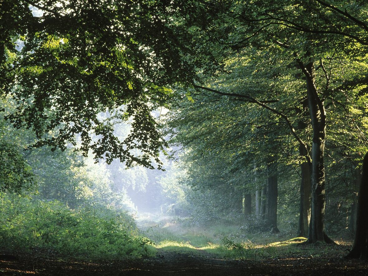 springtime-forest-in-germany