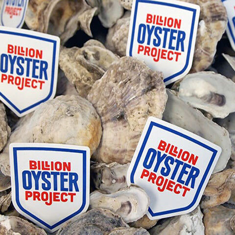 Summer on the Hudson Baylander Billion Oyster Project Presentation