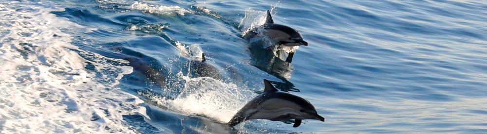 dolphin topslider-no-logo