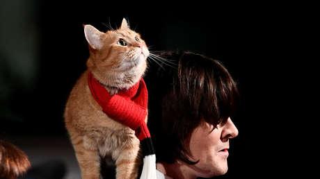 Muere Bob, el famoso gato callejero que inspiró libros y películas y salvó a su dueño de las drogas