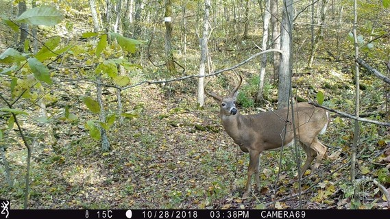 Buck captured on trail camera in 2018