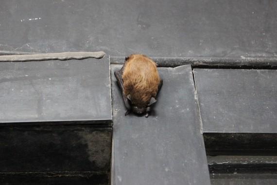 Bat on a building