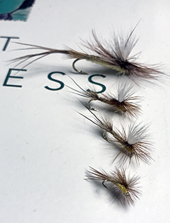 "A handful of Roberts' Yellow Drake flies are shown on the cover of a copy of ""Trout Madness"" by Robert Traver."