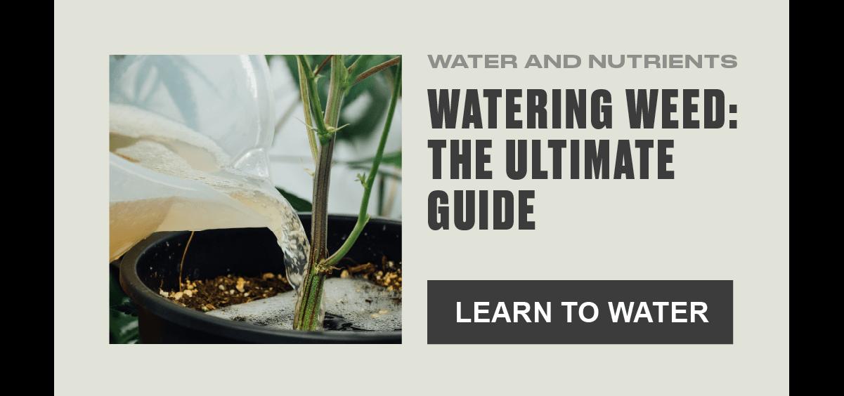 watering_tips