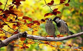 Tuyển tập những bài viết tâm sự về mùa thu hay, ý nghĩa