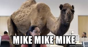 Image result for geico camel