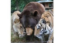 """Résultat de recherche d'images pour """"animaux"""""""
