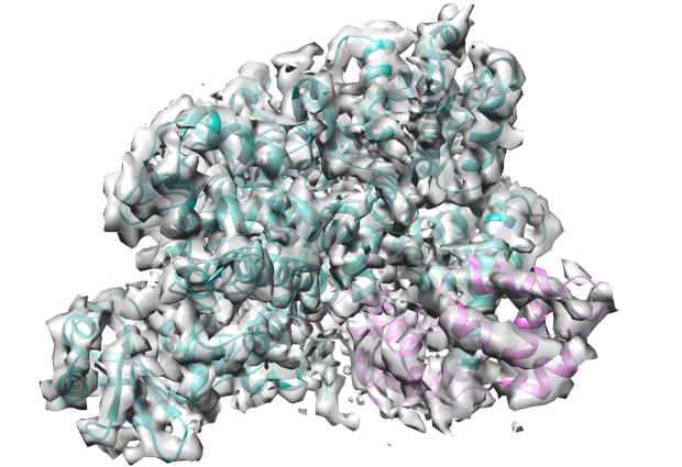 cryo-EM structure of SidJ-ib.png