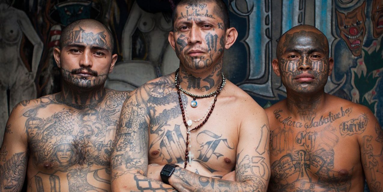 Lefty liberals inadvertently blast Trump's 'animals' label for immigrant MS-13 gang members ...