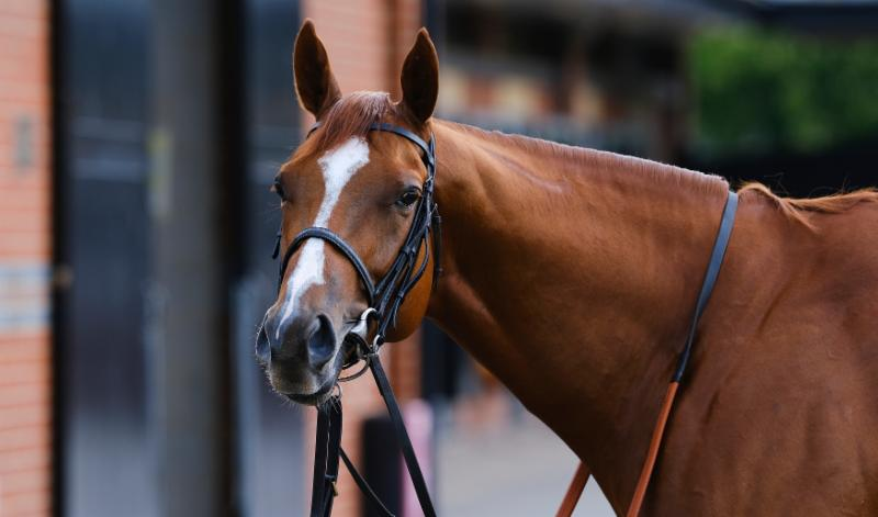Appleby hoping Line Of Duty can follow Masar & win the 240th