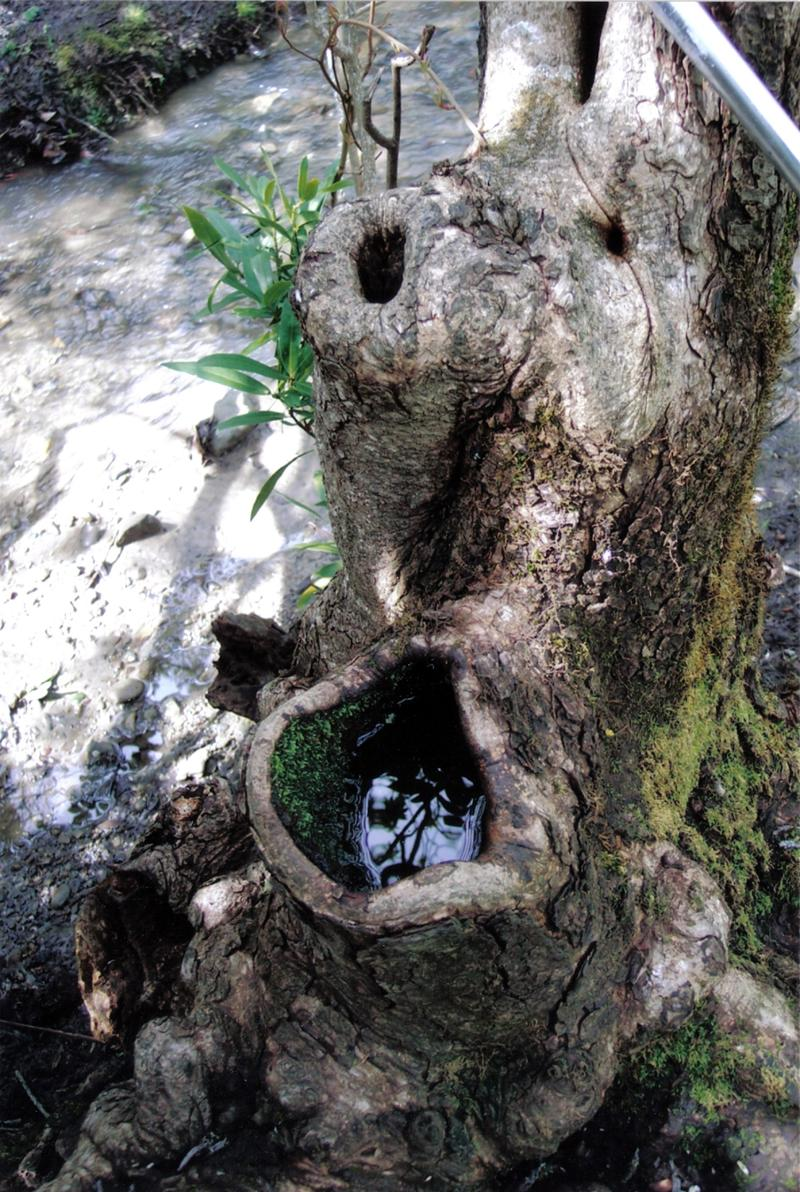 A tree hole where mosquitoes live