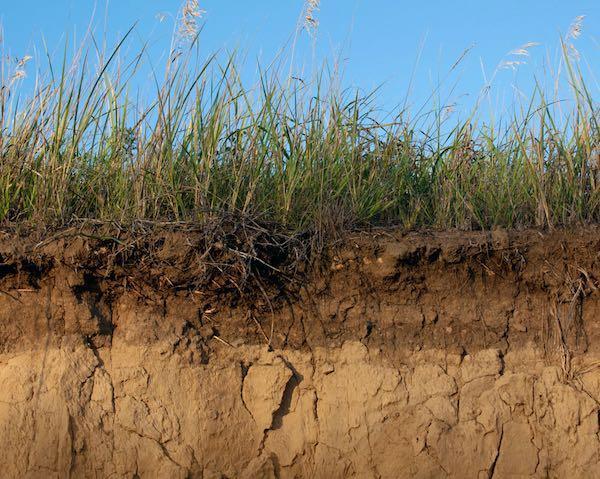 cross section of soil
