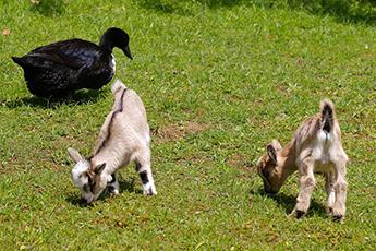 new-petting-zoo-1411440 960 720