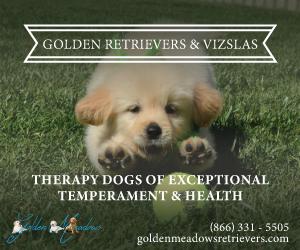 golden retriever ad