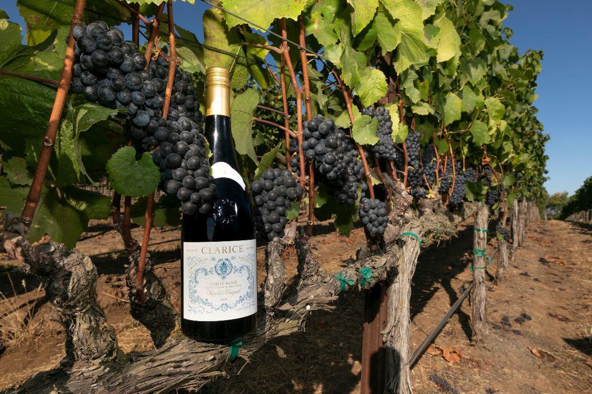 Clarice Wine Company