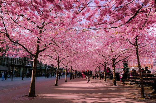 15 most beautiful flower streets in the world