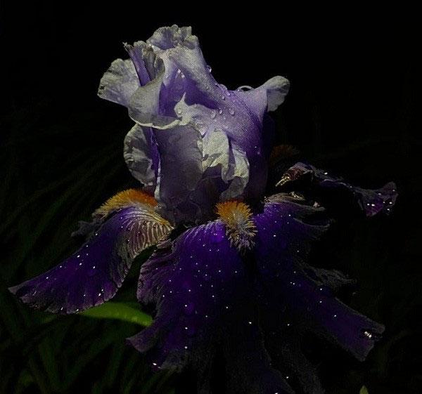 Những giọt nước trên cánh hoa có khiến bạn liên tưởng đến một bầu trời đêm đầy sao?