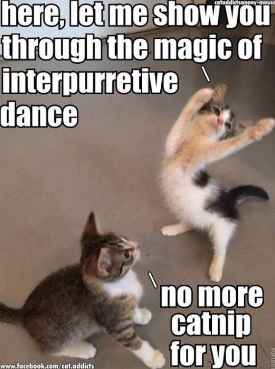 CRAZY cats and there catnip