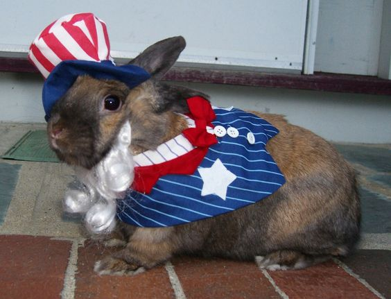 Fourth of July bunny costume. Adorable! My bun would possibly kill me if I made her wear this.. Too cute though!