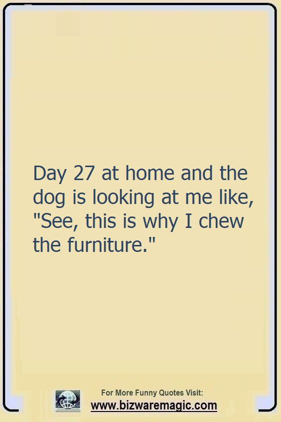 Day 27 at home and the dog is                                                          looking at me                                                          like, See,                                                          this is why I                                                          chew the                                                          furniture.                                                          Click The Pin                                                          For More Funny                                                          Quotes. Share                                                          the Cheer -                                                          Please Re-Pin.                                                          #funny                                                          #funnyquotes                                                          #quotes                                                          #quotestoliveby                                                          #dailyquote                                                          #wittyquotes                                                          #2020 #joke                                                          #COVID19                                                          #coronavirus                                                          #pandemic                                                          #TheDragonflyChallenge