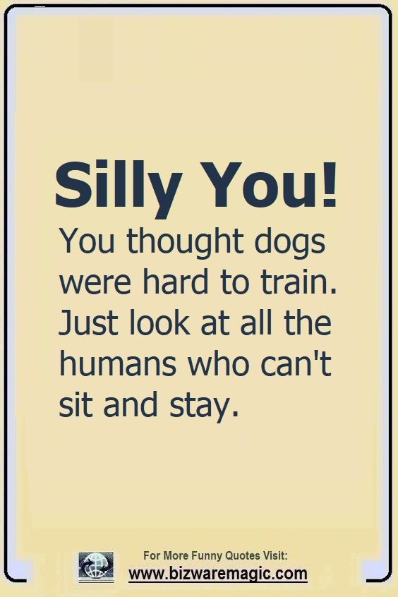 Silly You! You thought dogs                                                          were hard to                                                          train. Just                                                          look at all                                                          the humans who                                                          can't sit and                                                          stay. Click                                                          The Pin For                                                          More Funny                                                          Quotes. Share                                                          the Cheer -                                                          Please Re-Pin.                                                          #funny                                                          #funnyquotes                                                          #quotes                                                          #quotestoliveby                                                          #dailyquote                                                          #wittyquotes                                                          #oneliner                                                          #joke #puns                                                          #TheDragonflyChallenge