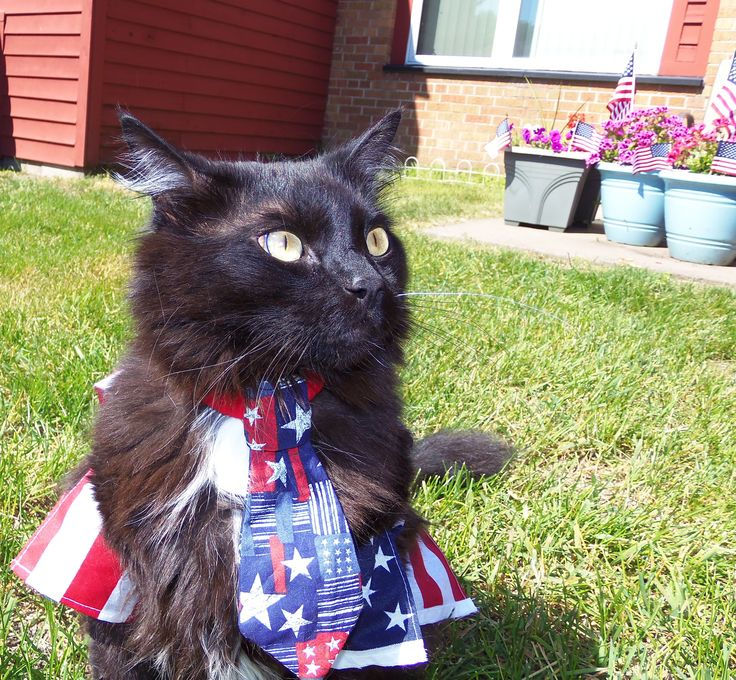 Image result for patriotic cats