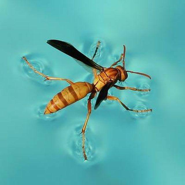 How To Get Rid Of Wasps | Hunker | Swimming pools, Backyard pool, Pool decor